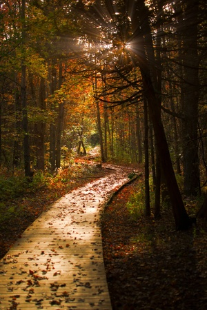 A wooden pathway cuts through a dark, mysterious forest in autumn colors. Foto de archivo