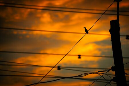 clutching: The silhouette of a small bird perched atop a mess of urban wires and cables against a bright, orange sunset.