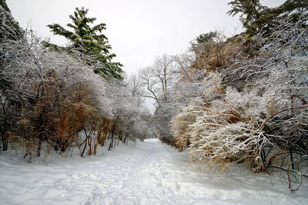 laden: Winter landscape: A foot beaten forest trail cuts through frost laden trees in Hogs Back Park in Ottawa, Ontario Canada.