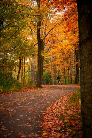 Cyclists bike down a winding bicycle path that cuts through the rich autumn foliage of Vincent Massey Park in Ottawa, Ontario Canada.
