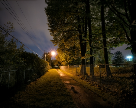 treed: A lonely, deserted and spooky treed pathway at night time in a city park.  Stock Photo
