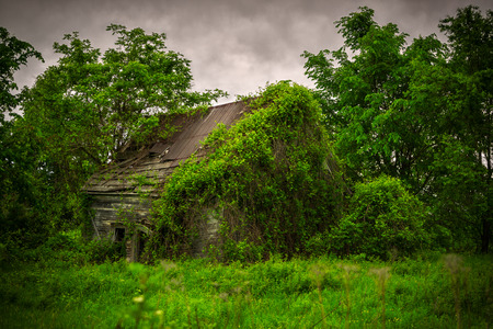 damaged roof: A very old, wooden, moss and climbing ivy covered cabin in the woods, left abandoned and derelict, slowly being reclaimed by the lush, green forest  Stock Photo