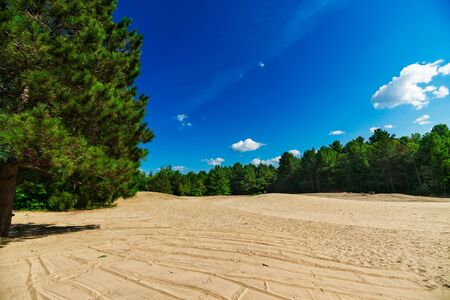 expansive: A large and expansive sand covered clearing opens out in the middle of an evergreen forest. Stock Photo
