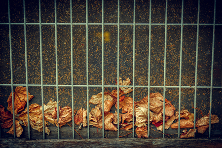 A collection of dead fallen Autumn leaves trapped between a wire screen and behind metal grate background. Standard-Bild