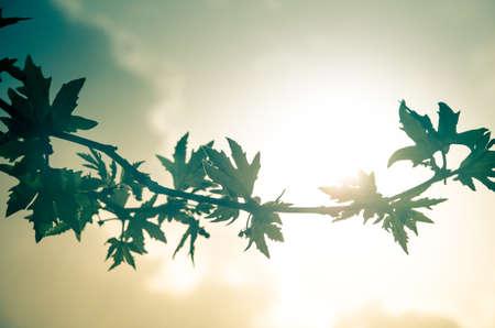 hazy: Hazy Silhouette of leaves