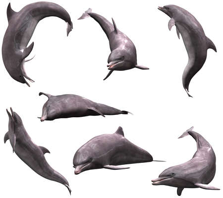 many Dolphins in pose - isolated on white
