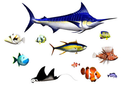 different fish species in pose - isolated on white