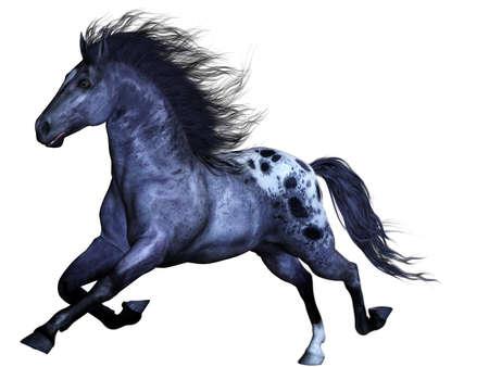 horse tail: un poderoso caballo salvaje - aislado en blanco