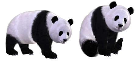 mammals: panda