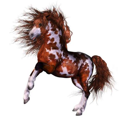 Il Walhalla 10218301-un-cavallo-accessoriato