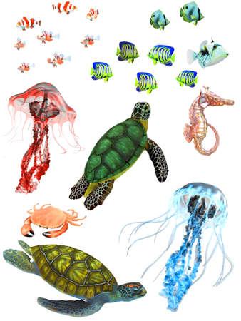 sea turtle: underwater animals Stock Photo