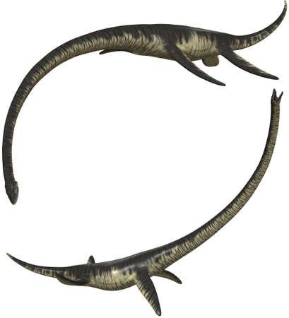 lived: Elasmosaurus  lived in Northamerica