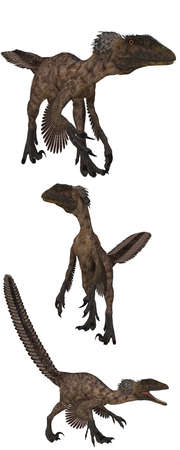 reptilia: Deinonychus lived in the USA - isolated on white Stock Photo