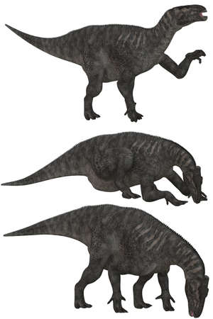 Iguanodon lived in North America, Europa and Asia - isolated on white