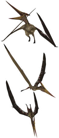 Pteranodon lived in North America - isolated on white Stock Photo