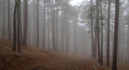 mountin: Landscape of mountin wood with deep mist Stock Photo