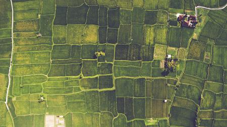벨벳으로 아름 다운 논 필드의 무인 항공기에서 상위 뷰 발리 마에서 녹색 젊은 콩나물. 어린 묘목을 세우고 난 후에 밭을 홍수로 재배하는 전통적인  스톡 콘텐츠
