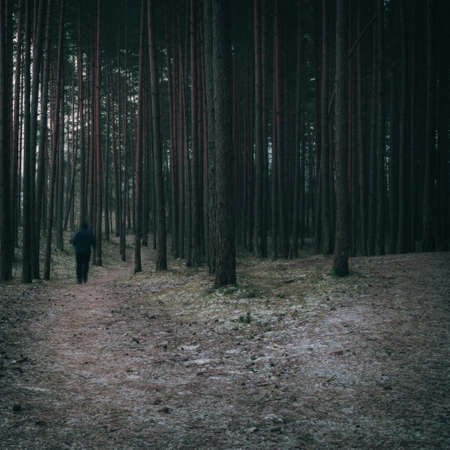 Man walking through the conifer forest, a country road through the dark forest, cinematic look