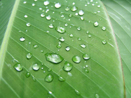 Droplets on a green leaf