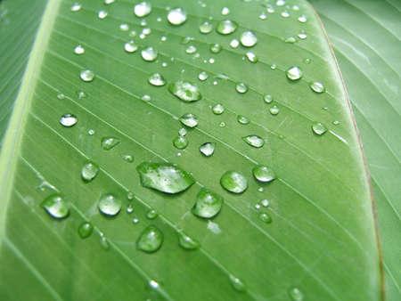 Goccioline su una foglia verde