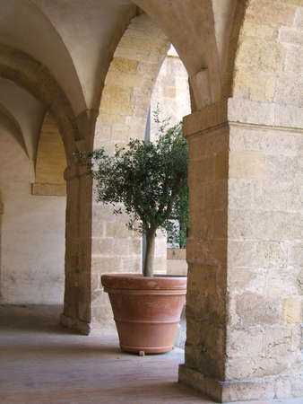 Olive tree under stone arche photo