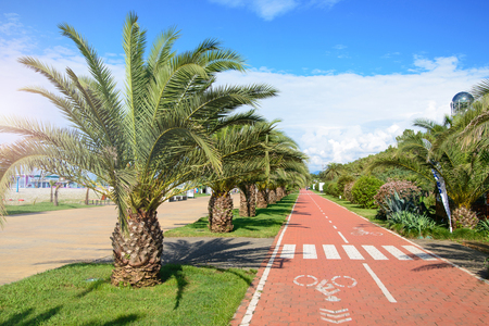 red bicycle track between palm trees on beach