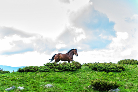 the horse that runs in the background of the sky and clouds
