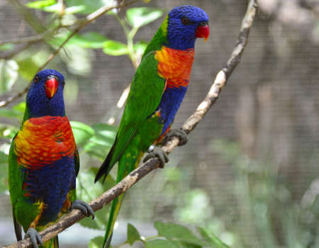 Colourful pair of birds perched together photo
