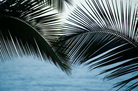 fronds: Palm fronds over blue ocean