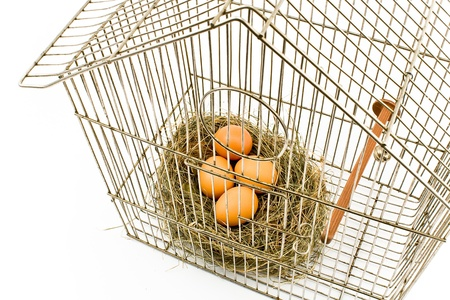 confined: Eggs in Nest confined in Bird Cage isolated on with