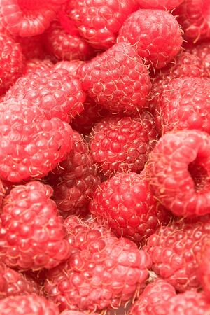 Freshly picked ripe red raspberries Stock Photo - 10256236