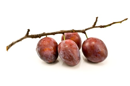 Plums on branch isolated on white Stock Photo - 10407262