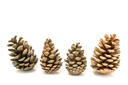 group objects: Four pine cones isolated on white