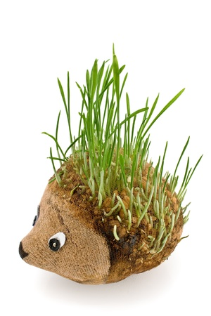 germinate: Hedgehog with germinating wheat grass instead of the spines on white Stock Photo