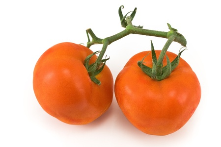 Tomatoes with petiole isolated on white  photo