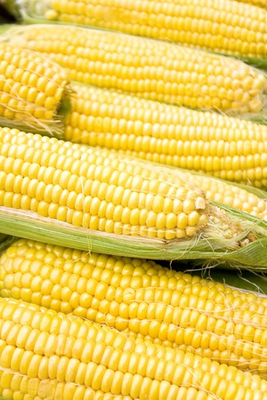 Corn as background Stock Photo - 15080757