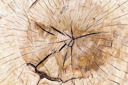 Texture of tree stump as background Stock Photo - 15254767