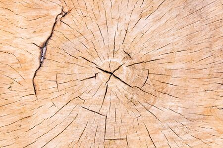 Texture of tree stump as background photo