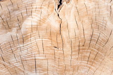 Texture of tree stump as background Stock Photo - 15311943