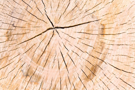 Texture of tree stump as background Stock Photo - 15575281