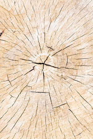 Texture of tree stump as background Stock Photo - 17284860