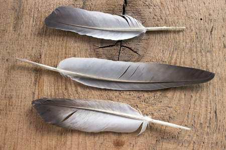Three feathers on wooden background photo