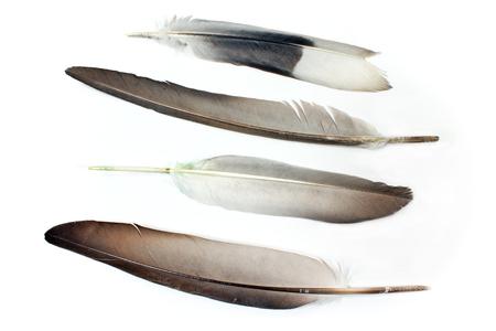 Feathers isolated on white photo