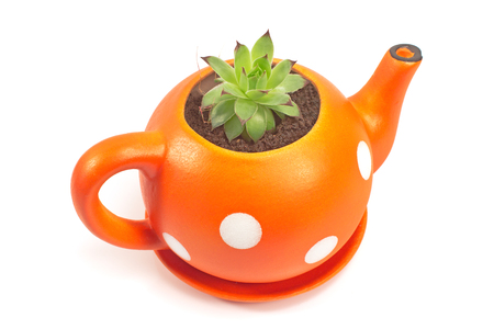 Flower pot in form of teapot with houseleek isolated on white