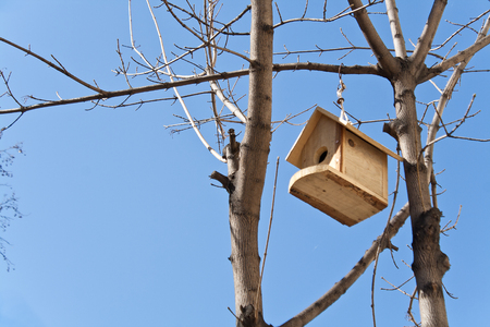 Birdhouse on a tree over blue sky