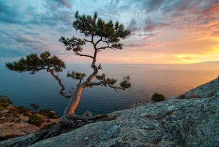 turismo ecologico: Naturaleza asombrosa de Crimea, Ucrania: mar, las rocas y pinos