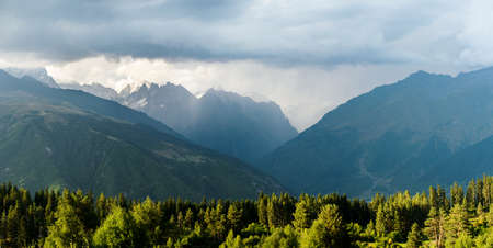 mestia: morning coniferous forest in the Caucasus mountains in Georgia, Svaneti, Mestia