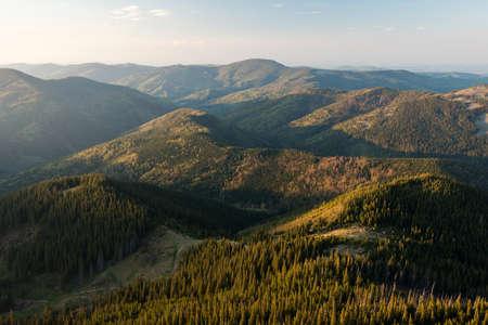 turismo ecologico: bosque de con�feras en los C�rpatos ucranianos en la ma�ana. Foto de archivo