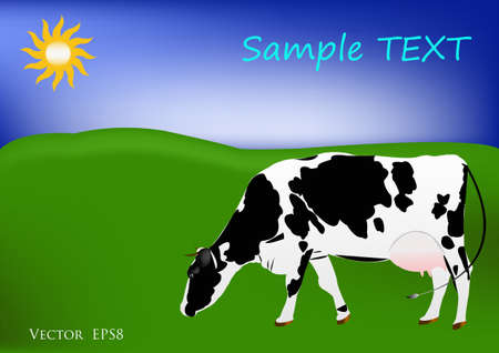 grazed: The cow of dairy breed is grazed on a green summer meadow Illustration