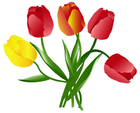 Celebratory bouquet of multi-coloured beautiful tulips on a white background Stock Vector - 11438025
